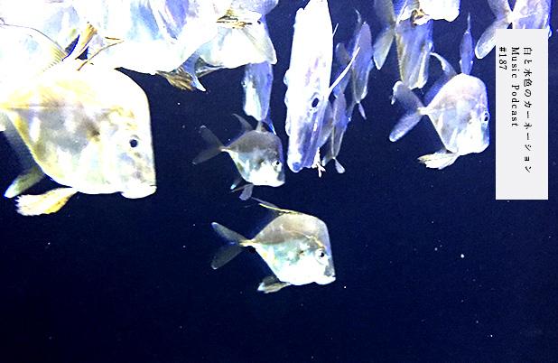 #187 シーラカンス(冷凍)を観に沼津港深海水族館へ。