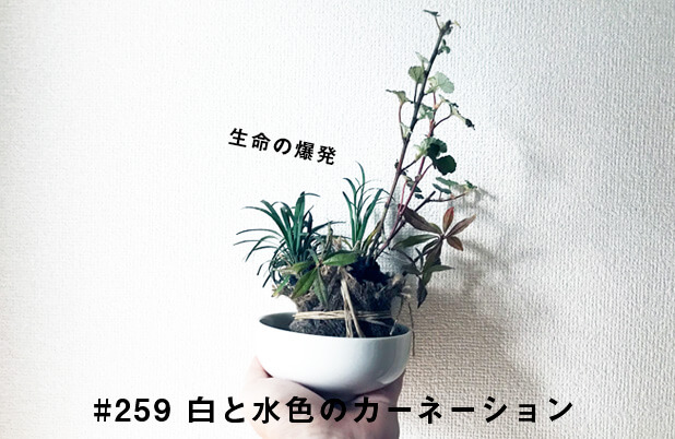 #259 生命の爆発(東京150年浜離宮スタンプラリー・盆栽ワークショップ)
